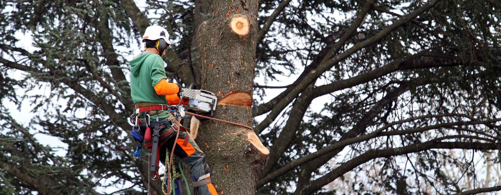 Tout un dispositif de sécurité pour abattre un arbre dangereux