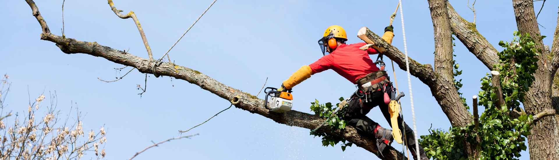 A votre disposition pour l'abattage d'arbre dangereux en Suisse