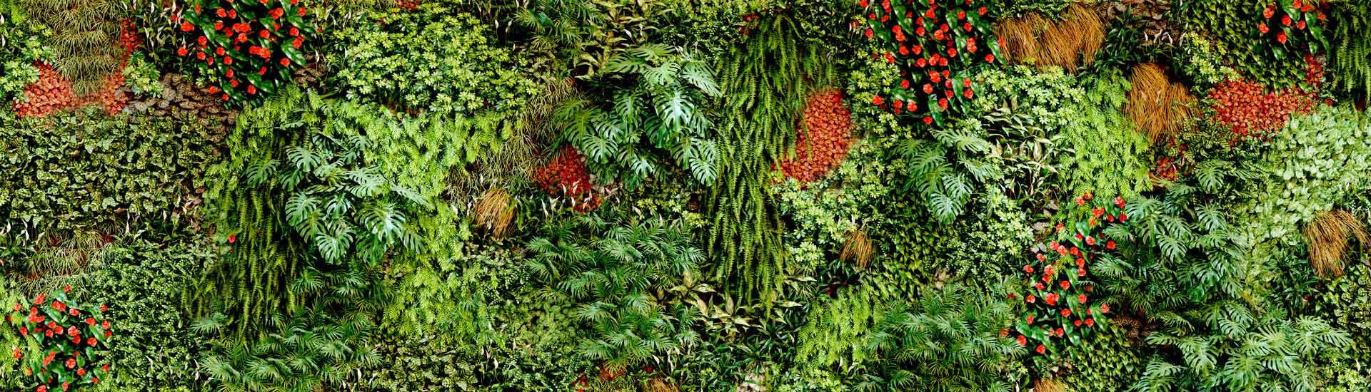 La construction d'un mur végétal en Suisse