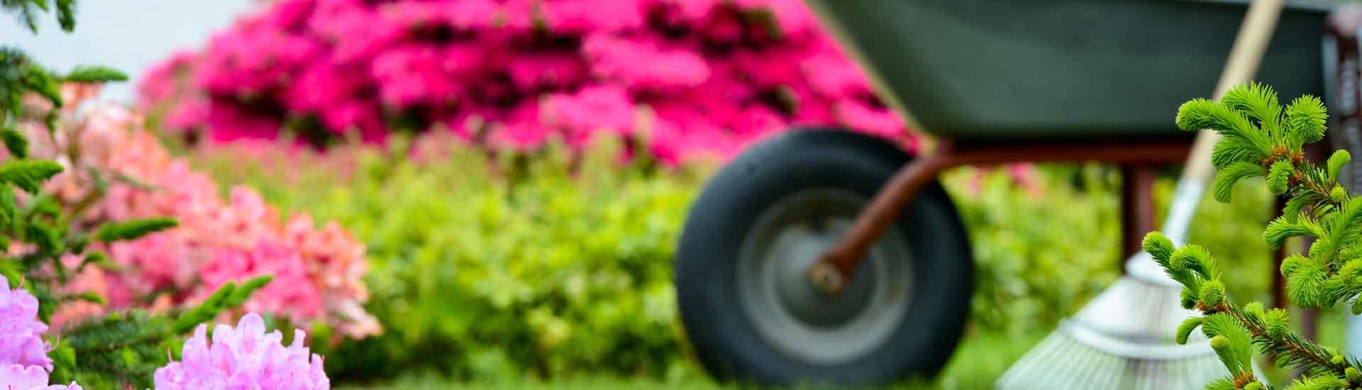 Souscrivez à notre contrat d'entretien jardin en Suisse