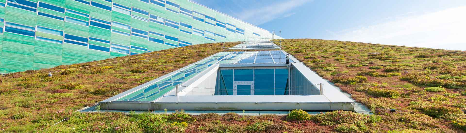 Contactez notre entreprise pour votre toiture végétale