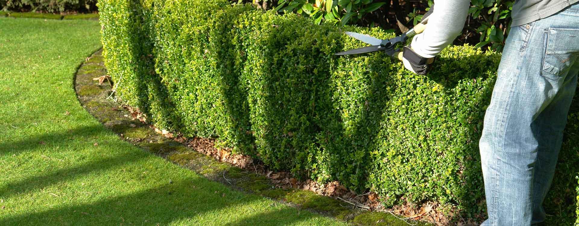 L'importance de l'entretien du jardin