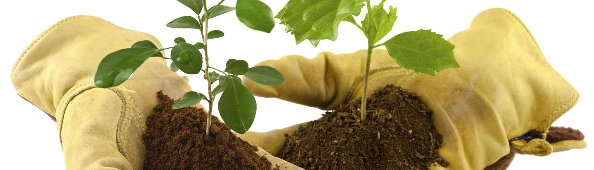 Entreprise de plantation jardin