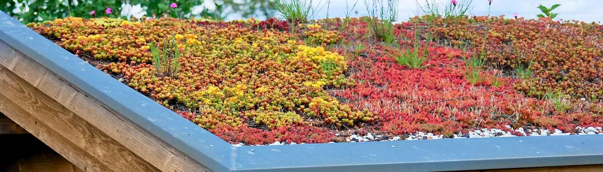 Réalisation d'une toiture végétale en Suisse
