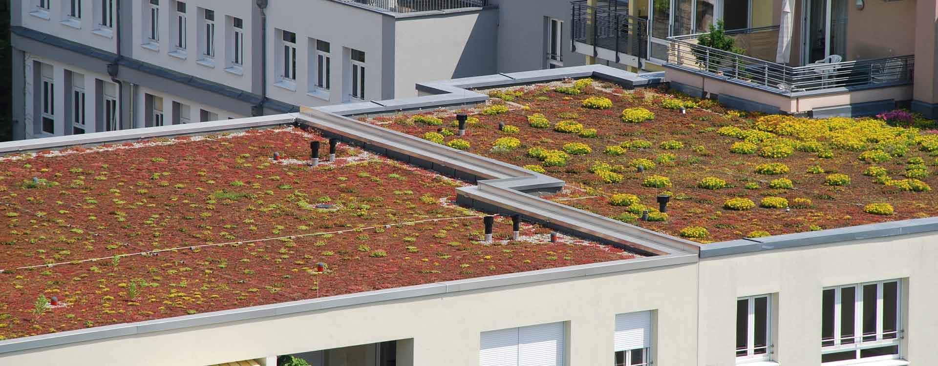 Les atouts d'une toiture végétalisée en Suisse